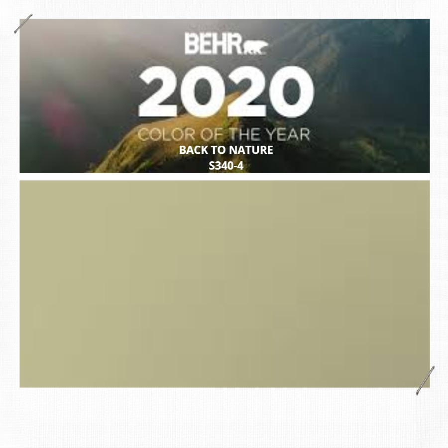 BEAR COLOR OF THE YEAR